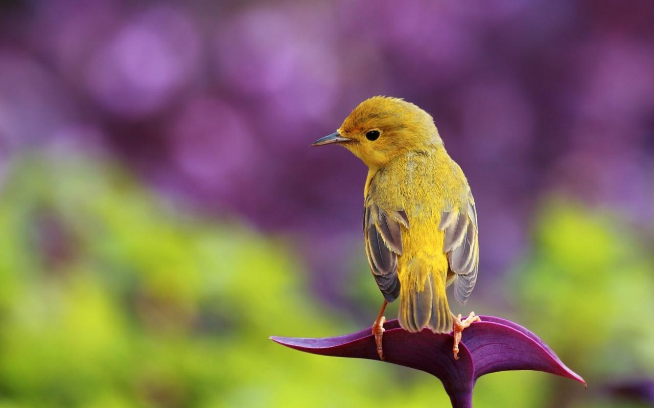 صورة صور طيور ملونه , اشكال والوان مبدعة جذابة للطيور