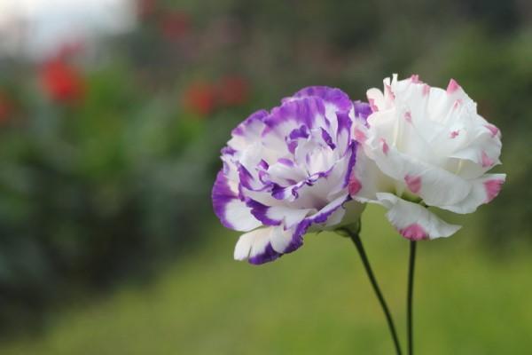 صور احلى ورود الصباح , اروع الزهور لصباح ملئ بالتفاؤل