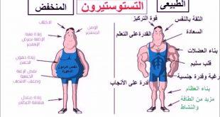 صور ما هو هرمون التستوستيرون , سبب ظهور الصفات الذكورية