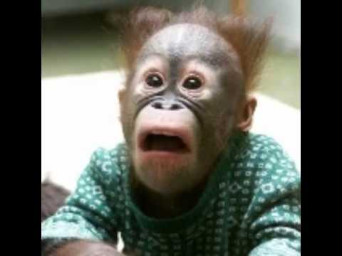 صورة صور حيونات مضحكة , مش هاتقدر تمسك نفسك من الضحك