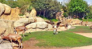 صورة صور حديقة الحيوانات , رمزيات شيقة عن الحيوانات المختلفة في الحديقة
