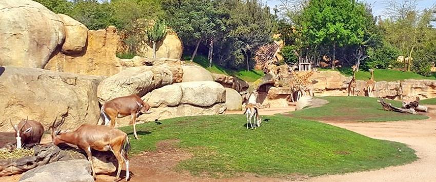 صور صور حديقة الحيوانات , رمزيات شيقة عن الحيوانات المختلفة في الحديقة