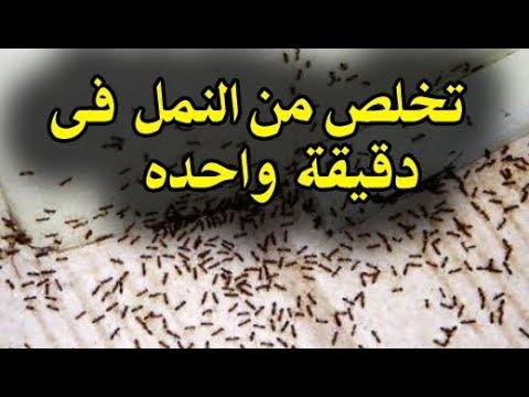 صورة طريقة للتخلص من النمل بشكل نهائي , في تلات ثواني تخلصي من النمل للابد