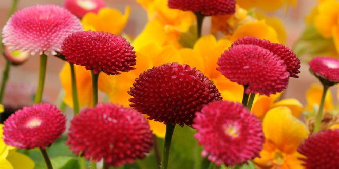 صور اسماء الورد بالفرنسي , معاني واسماء الورود بالفرنسيه
