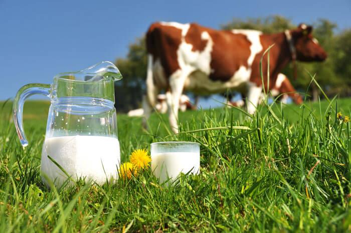 صورة تفسير البقرة في الحلم , رؤية البقر في المنام خير وفير