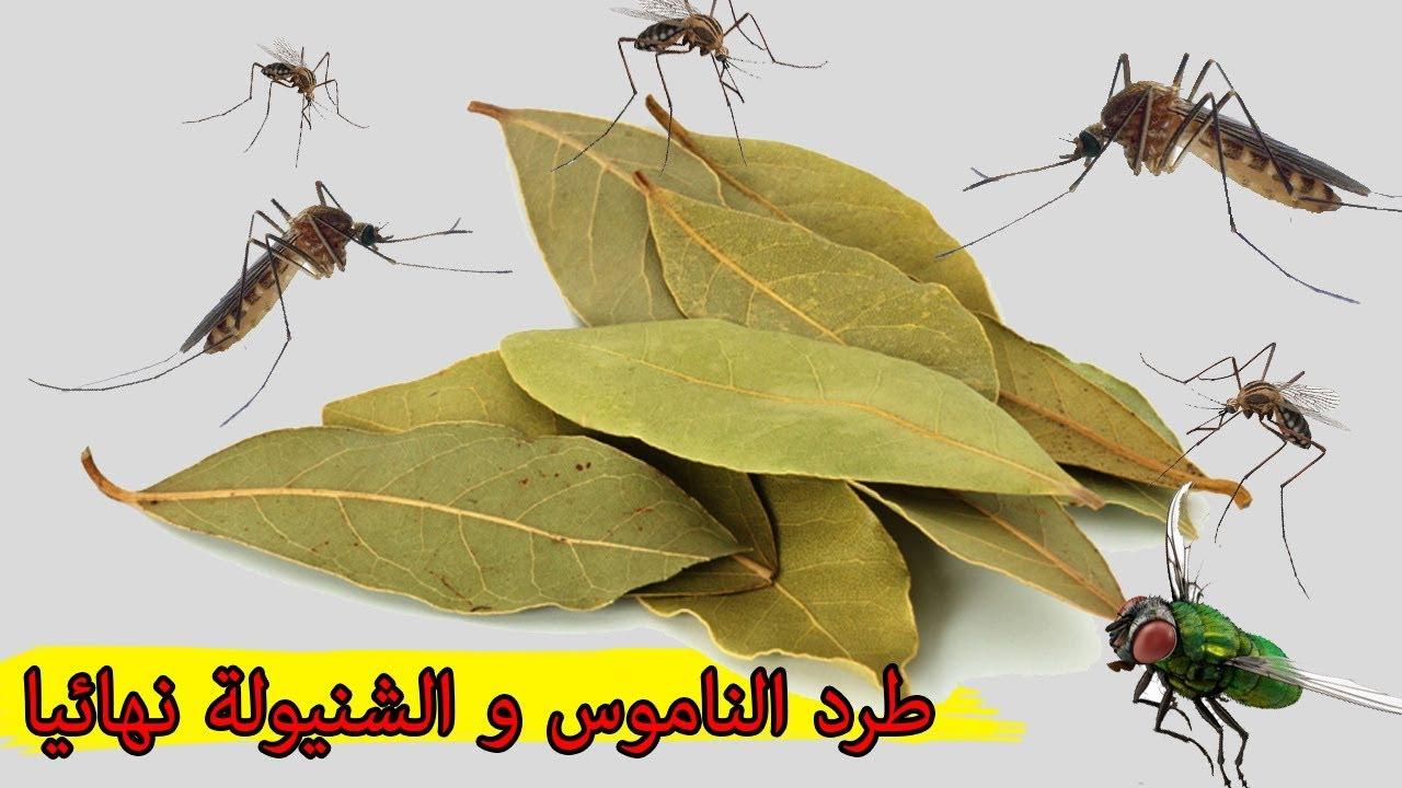 صورة طريقة طرد الناموس , تخلصي من الحشرات المنزلية بسهولة وريحة تجنن