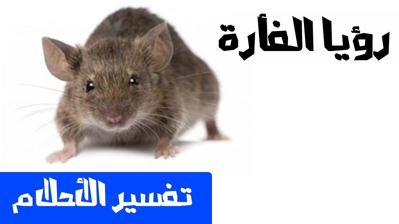 صور تفسير حلم الفاره , كيفية تفسير رؤية فئران في المنام