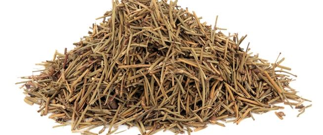 صور فوائد عشبة العلندة , ماهى نبتة العلندة وفيم تستخدم