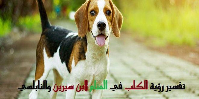 صور الكلبة في المنام , رجل يحلم بكلبة تلعقه