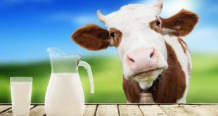 صور افضل انواع الحليب , تعرفي على انواع اللبن المختلفة وايهم اكثر قيمة غذائية