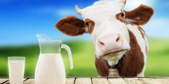 صورة افضل انواع الحليب , تعرفي على انواع اللبن المختلفة وايهم اكثر قيمة غذائية