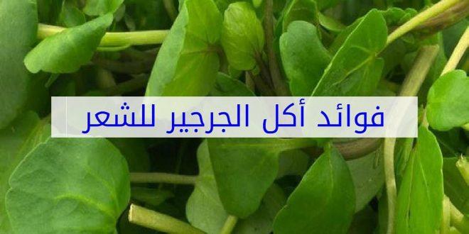 صور فوائد اكل الجرجير , مميزات اكل خضروات الجرجير المفيدة جدا