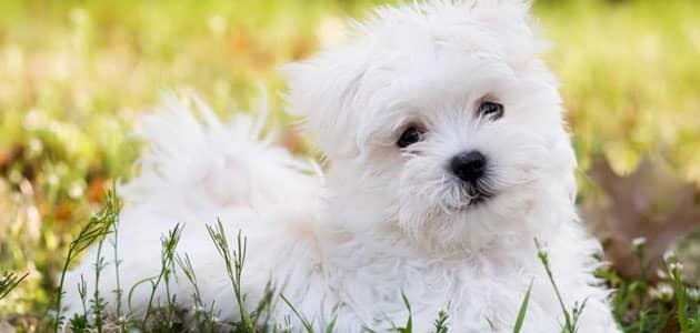 صورة رؤية الكلاب الاليفة في المنام , حلم غريب يراودني وهو مشاهدة الكلاب في منامي