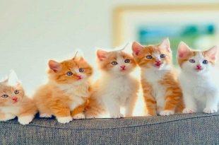صورة رؤية القطط في المنام للمتزوجة , وجود القطة في حلم المراة المتجوزة خير ولا شر