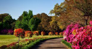 صور صور حديقة جميلة , صورة من الجنة في الارض