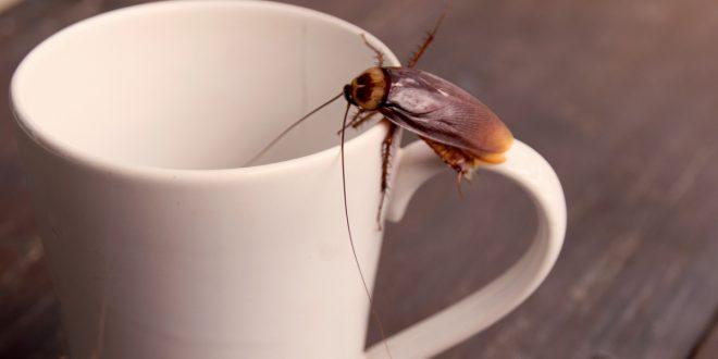 صور تفسير رؤية الصراصير , حلمت انى اقتل صرصورا