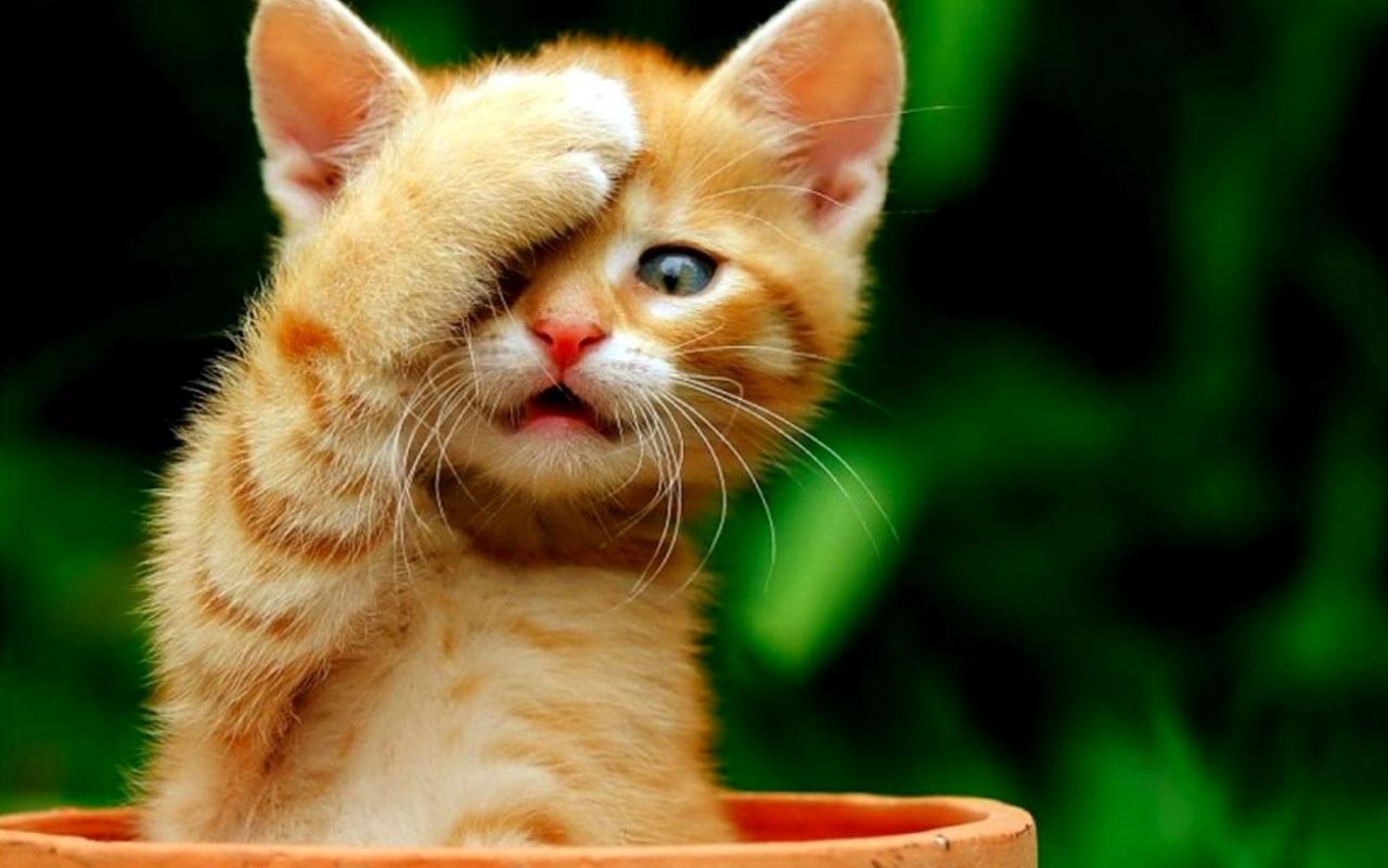 صورة صور الحيوانات مضحكة , اضحك مع حيوانك المفضل