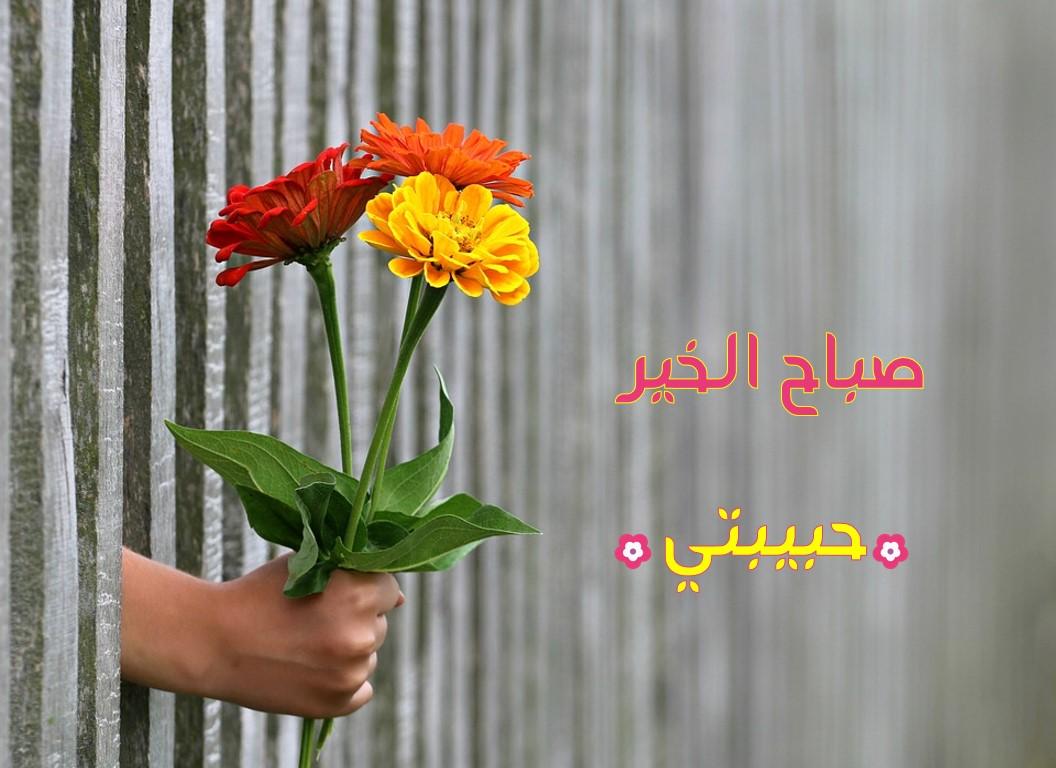 صورة صباح الورد ياعمري , ياصباح الخير ياللي معانا