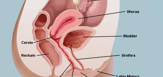 صورة علاج لالتهاب المهبل , اسرع علاج للاتهابات المهبل
