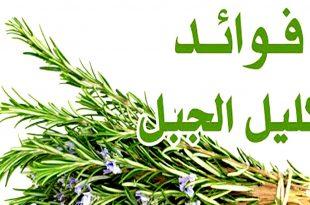 صورة فوائد شرب اكليل الجبل , عشبة الروزماوى لايمكن ان تستغنى عنها بعد الان