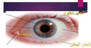 صورة تركيب العين ووظائفها , مركز الابصار في الوجه