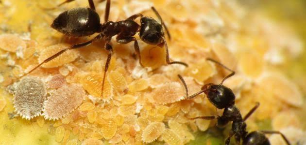 صورة رؤية النمل في المنام ابن سيرين , معني النمل في الحلم