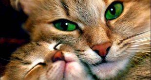 صورة صور قطط جميلة , قطه جميله جدا