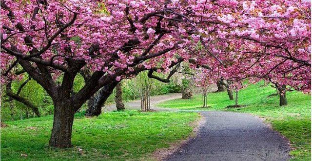صورة عبارات عن فصل الربيع , فصل يدعوا للفرح هو الربيع