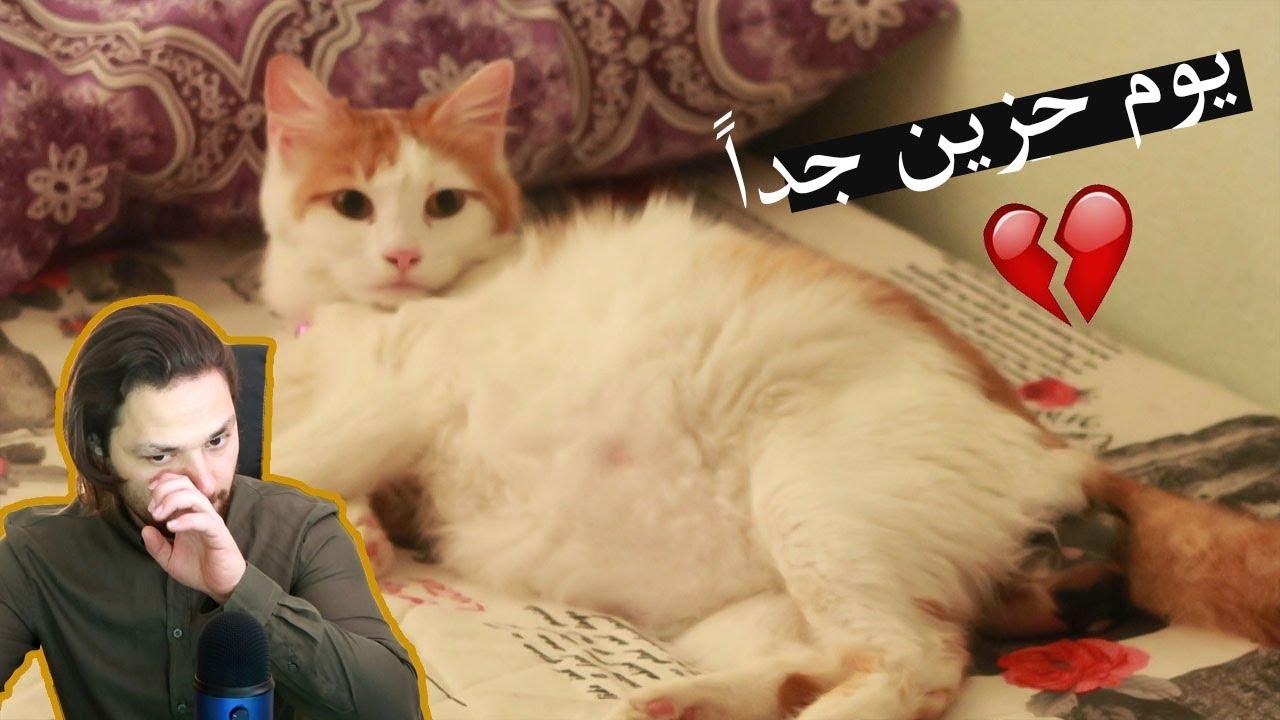 صورة اجمل القطط الصغيرة , قصة ولادة القطة