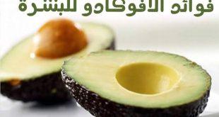 فوائد الافوكادو للوجه , اهمية فاكهة الافوكادو للبشره و الشعر