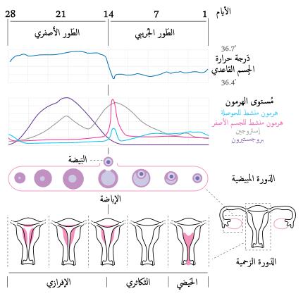صورة متى الدورة الشهرية , كيف اعرف ميعاد الدوره الشهريه