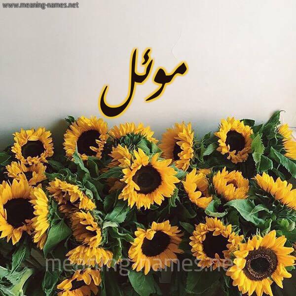 صورة معنى كلمة موئل , ماذا تعني كلمة مئل في اللغه العربيه