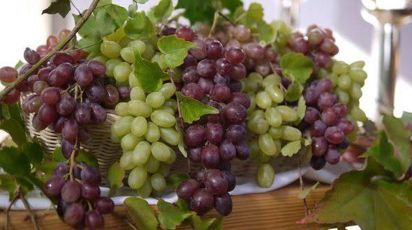صورة تفسير حلم اكل العنب الاصفر , معني العنب الاصفر في الحلم