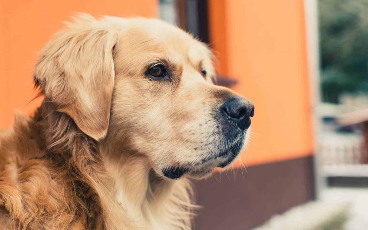 صورة تفسير حلم الكلاب تطاردني , كلبي دليلي قالي تطاردني