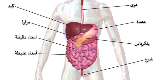 صورة رسم تخطيطي للجهاز الهضمي , رسم تخطيطي بالبيانات للجهاز الهضمي