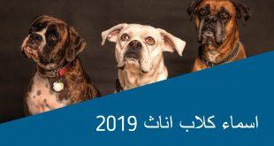 صورة اسماء كلاب اناث , اسماء سهلة لاناث الكلاب