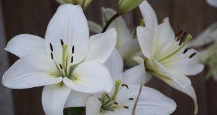 صورة احلى صور زهور , انواع الزهور الجميله