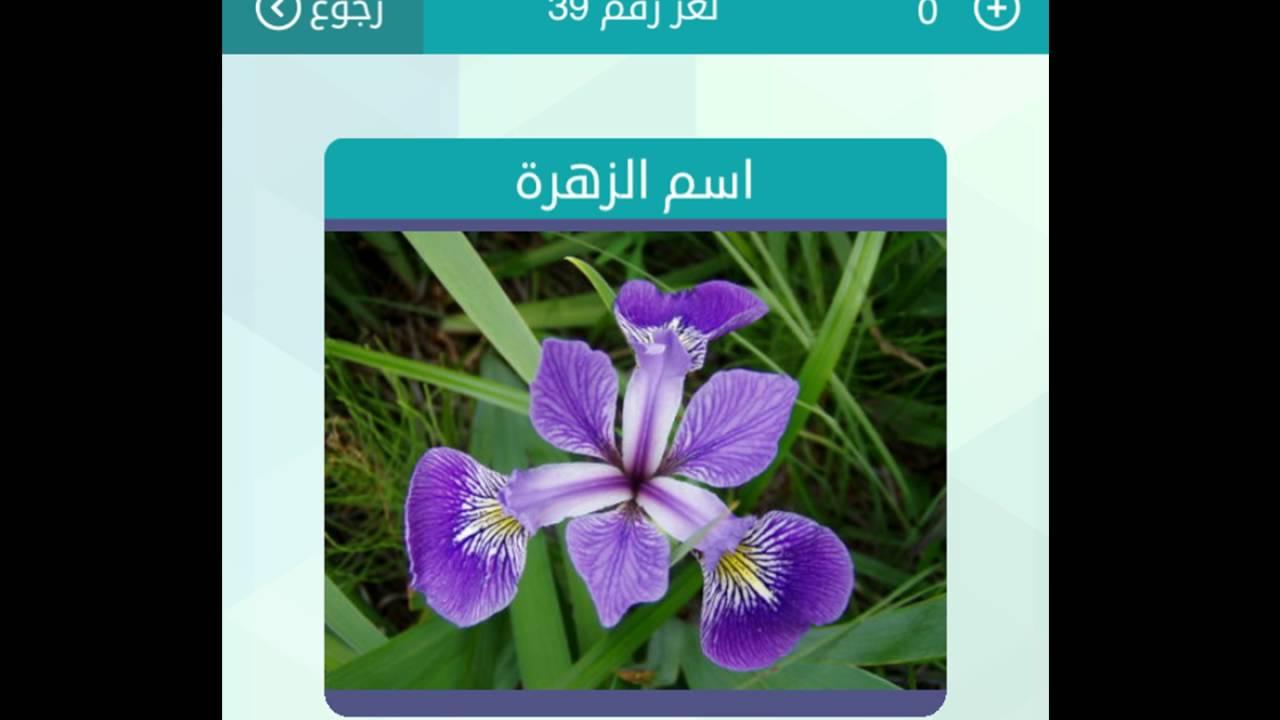 صورة من الزهور كلمات متقاطعة , العاب ممتعه ورائعه