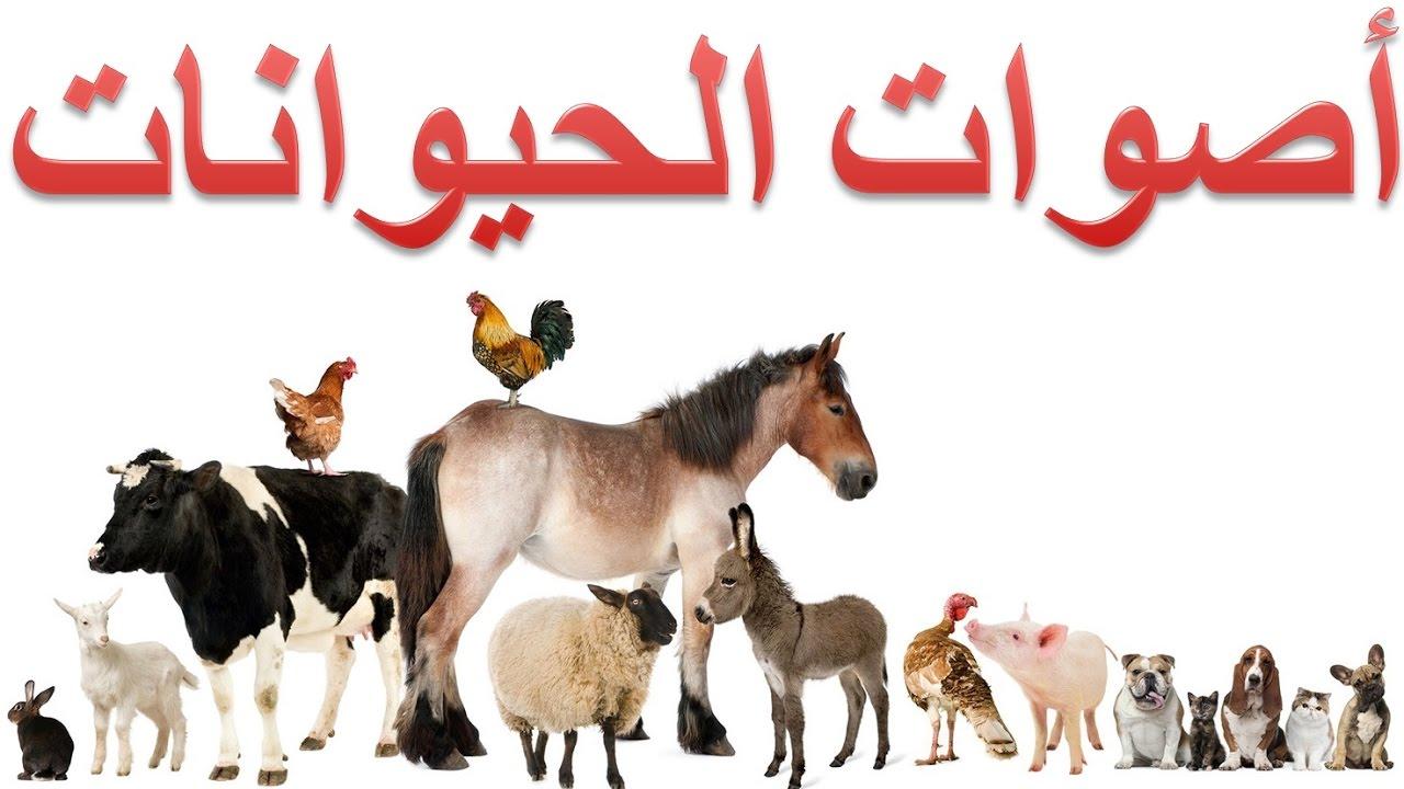 صورة اصوات الحيوانات كلها , تعرف علي اسم صوت حيوانك