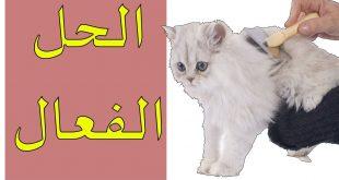 صورة كيفية ازالة شعر القطط من الملابس , النظافه فى دقيقه