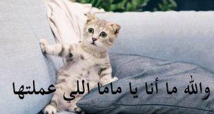 صورة صور مضحكة عن الحيوانات , احلى ضحكه دى ولا ايه ع اجمل صور