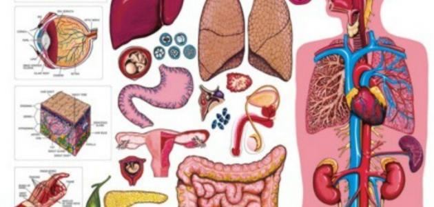 صورة معلومات عن الجسم, اشياء مذهله دخال جسمك
