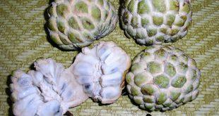 صورة ما هي فوائد فاكهة القشطة ،اهمية فاكهة القشطة لصحتك وفائدتها