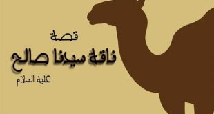 صورة اسم ناقة صالح , تعرف على القصه كامله