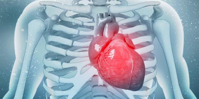 صورة افضل علاج لضعف عضلة القلب, اعشاب طبيعيه ساحره