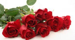 صورة ورد احمر جميل, اشكل الورد الحمراء المعبره