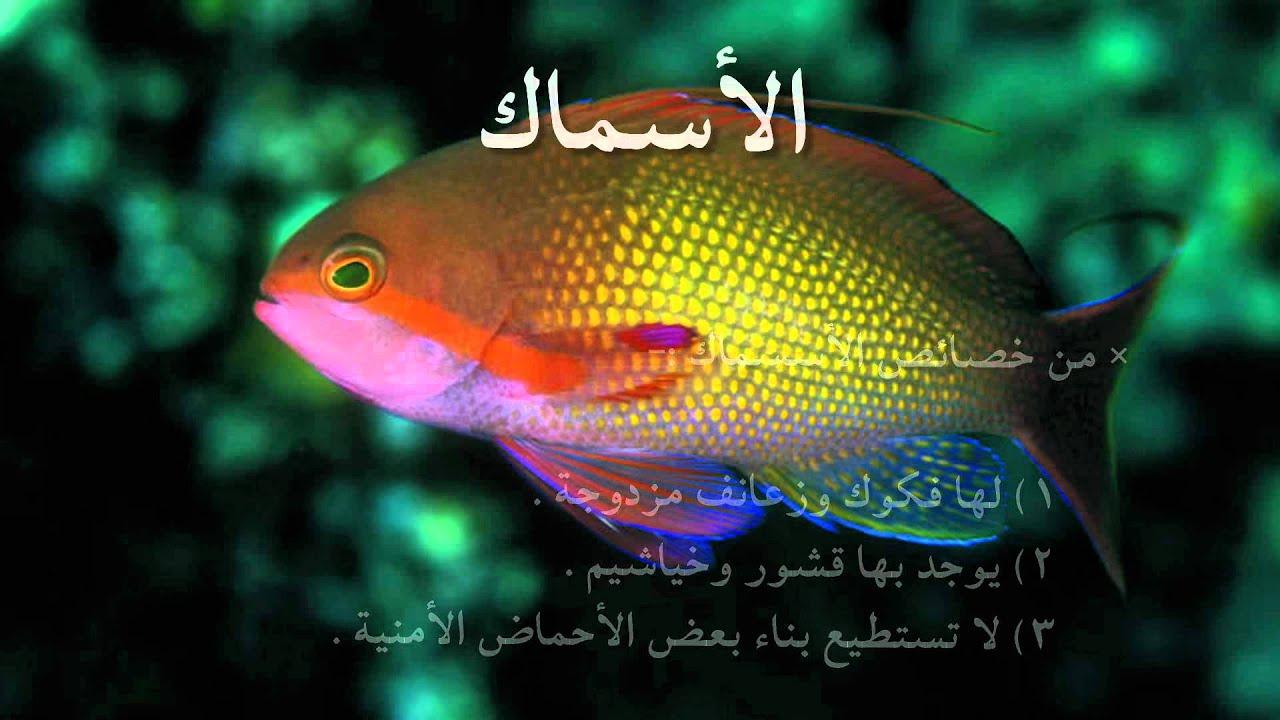 صورة بحث قصير عن الاسماك ،موضوع تعبيري عن اهميه الاسماك