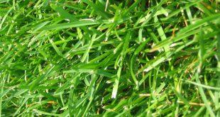 صورة مدلول العشب الاخضر في الحلم,العشب الاخضر في المنام