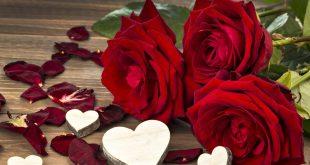 صورة وااااو اجمل الكلمات عن الورود , ورود جميله جدا